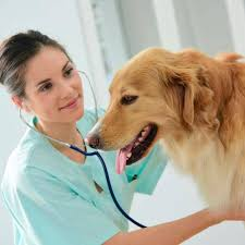 best-private-label-supplements-pet-health-02