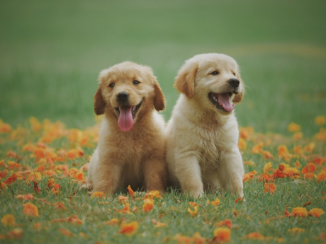 Contract Manufacturing of Pet Products USA