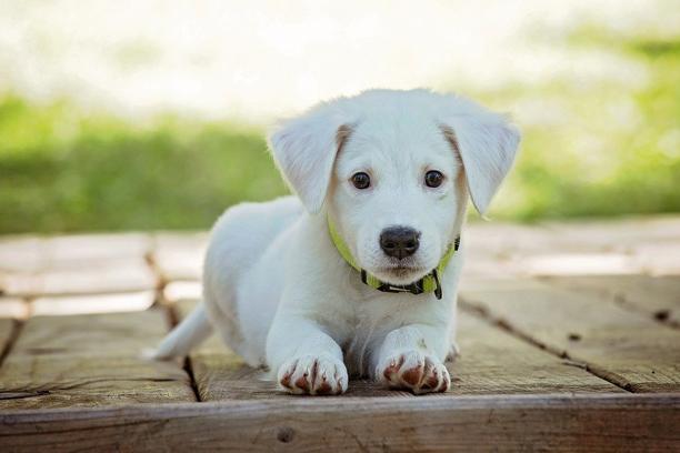 Dog Food Manufacturers USA