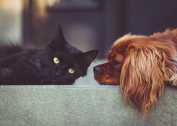 Custom pet food & supplement products | Contract MFG