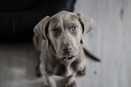Best Dog Treats in Bulk mfg