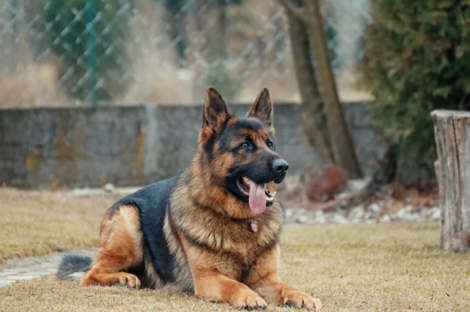 Contract Manufacturing Companies for Pet Products