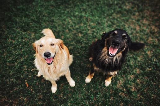 Who Makes Pet Food? Dog Food Plants