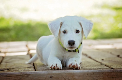 Who Makes Private Label Pet Food Products | Green Mountain Animal LLC